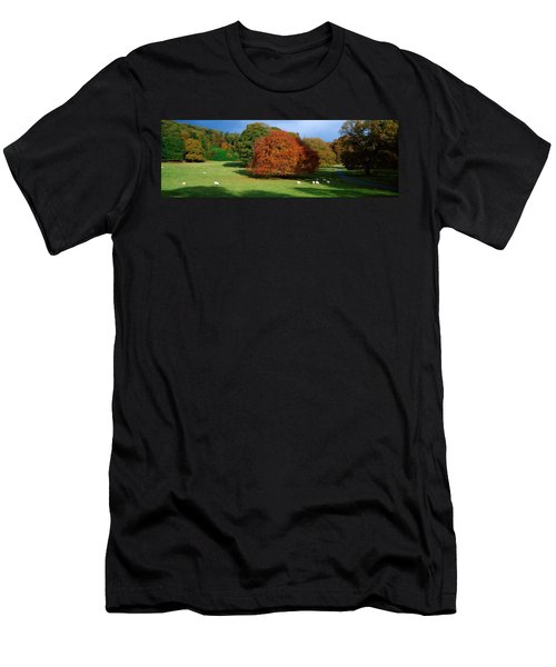 Beech Tree, Glendalough, Co Wicklow Men's T-Shirt (Athletic Fit)