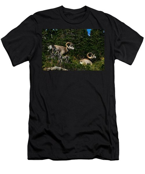 Big Horn Sheep Glacier National Park Men's T-Shirt (Athletic Fit)