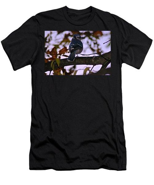 Blue Jay Men's T-Shirt (Slim Fit) by Joe Faherty