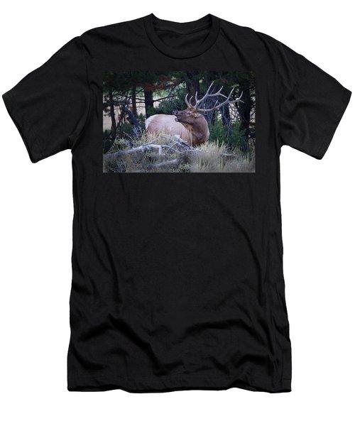 Bugling Bull Elk Men's T-Shirt (Athletic Fit)