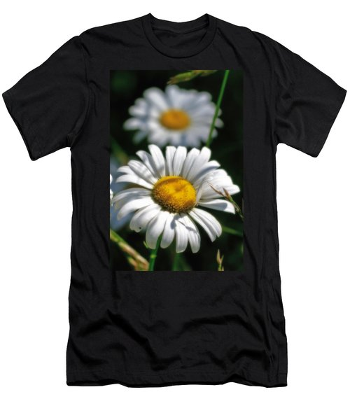 Daisies Aglow Men's T-Shirt (Athletic Fit)
