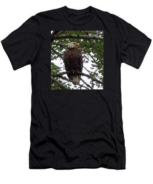 Eagle At Hog Bay Maine Men's T-Shirt (Slim Fit) by Francine Frank