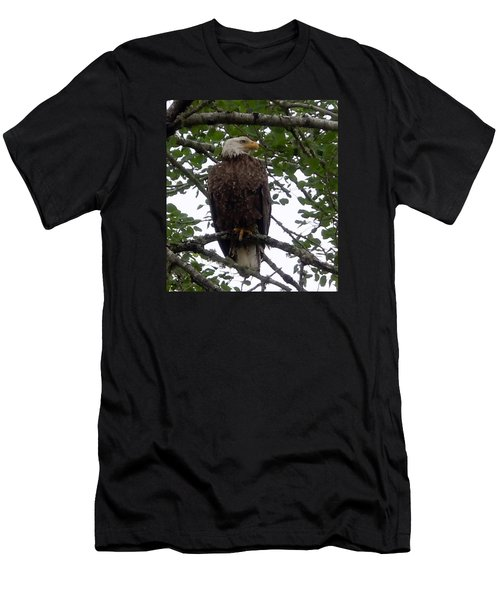 Eagle At Hog Bay Maine Men's T-Shirt (Slim Fit)