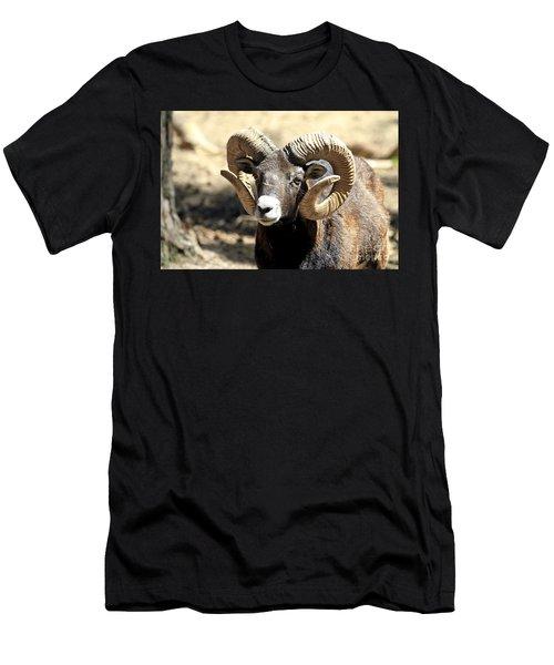 European Big Horn - Mouflon Ram Men's T-Shirt (Athletic Fit)