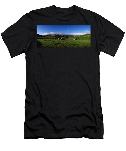 Friesian Cattle, Allihies, Co Cork Men's T-Shirt (Athletic Fit)