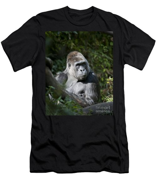 Gorilla Men's T-Shirt (Slim Fit) by Chris Dutton