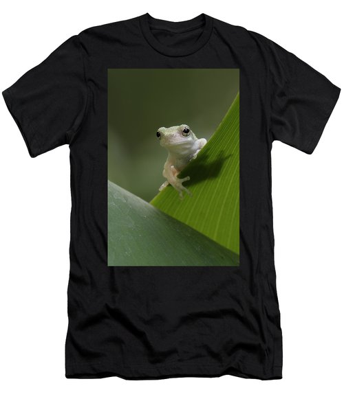 Juvenile Grey Treefrog Men's T-Shirt (Athletic Fit)