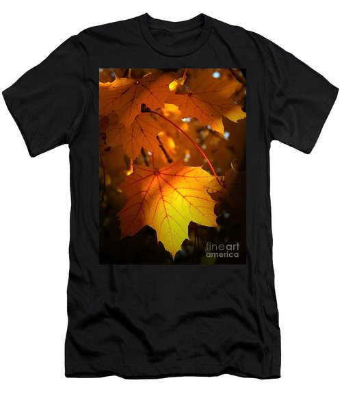Maple At First Light Men's T-Shirt (Athletic Fit)