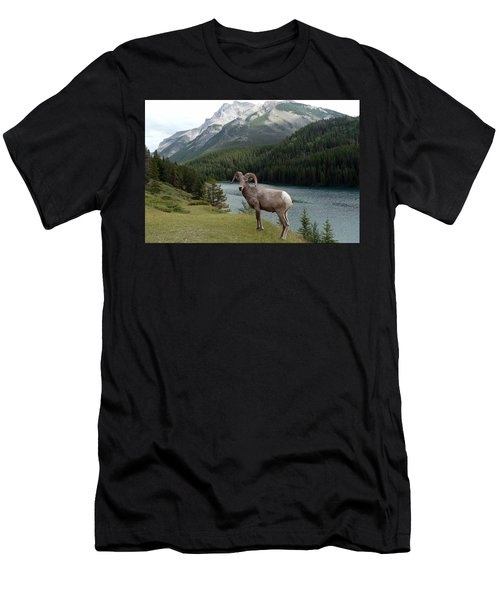 Portrait Of A Bighorn Sheep At Lake Minnewanka  Men's T-Shirt (Athletic Fit)