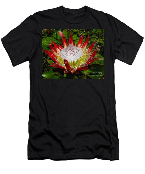 Red King Protea Men's T-Shirt (Athletic Fit)