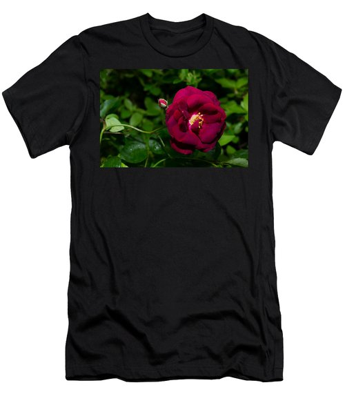 Red Rose In The Wild Men's T-Shirt (Athletic Fit)