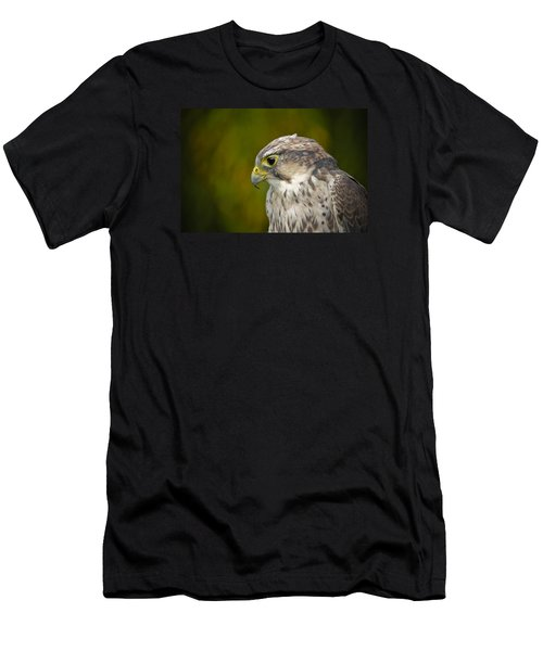 Thoughtful Kestrel Men's T-Shirt (Athletic Fit)