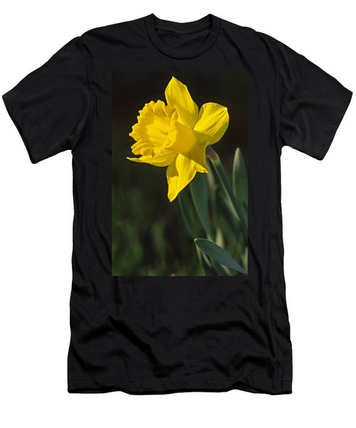 Trumpeting Daffodil Men's T-Shirt (Athletic Fit)