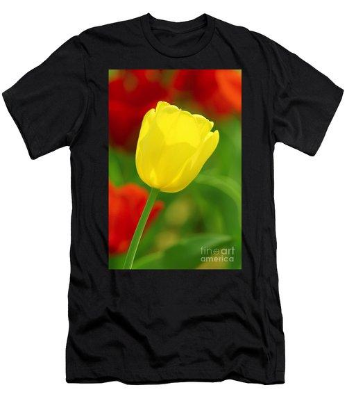 Tulipan Amarillo Men's T-Shirt (Athletic Fit)