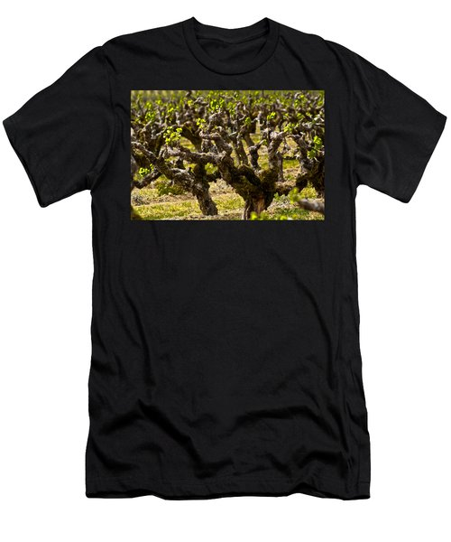Wine On The Vine Men's T-Shirt (Slim Fit) by Colleen Coccia