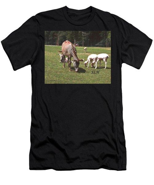 Zebra's Grazing Men's T-Shirt (Athletic Fit)