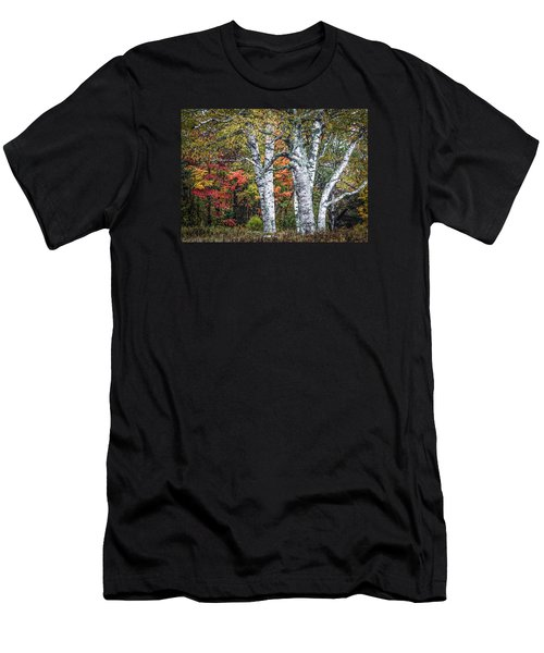 #0050 - Birch Trees Men's T-Shirt (Athletic Fit)
