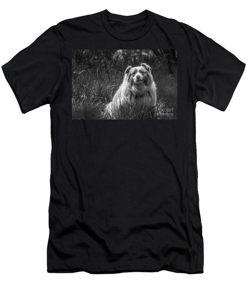 Australian Shepherd Dog Men's T-Shirt (Athletic Fit)