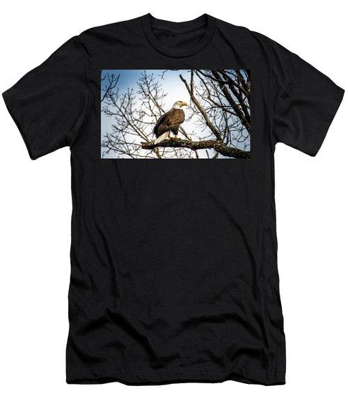 Bald Eagle Majesty Men's T-Shirt (Athletic Fit)