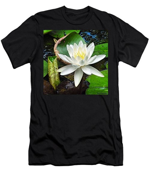 #beautiful #water #lily At Mayfield Men's T-Shirt (Athletic Fit)