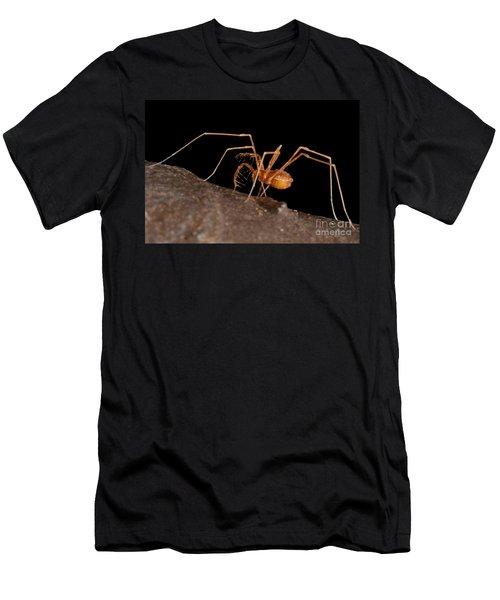 Cave Harvestman Men's T-Shirt (Athletic Fit)