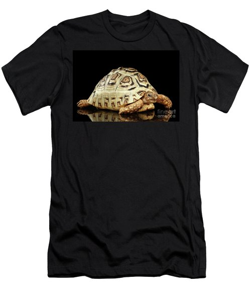 Men's T-Shirt (Athletic Fit) featuring the photograph Closeup Leopard Tortoise Albino,stigmochelys Pardalis Turtle With White Shell On Isolated Black Back by Sergey Taran