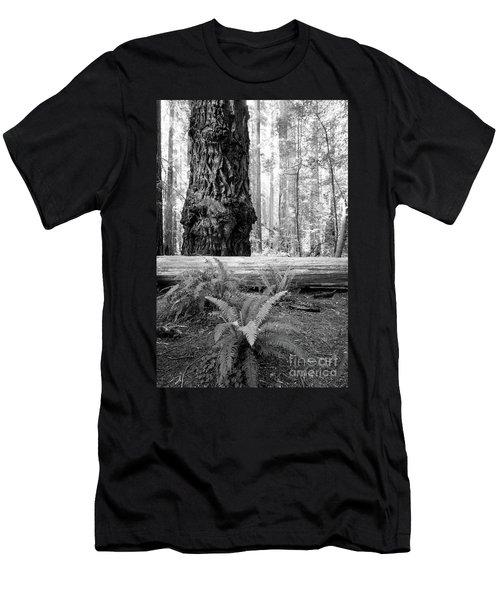 Coastal Redwoods  Men's T-Shirt (Athletic Fit)