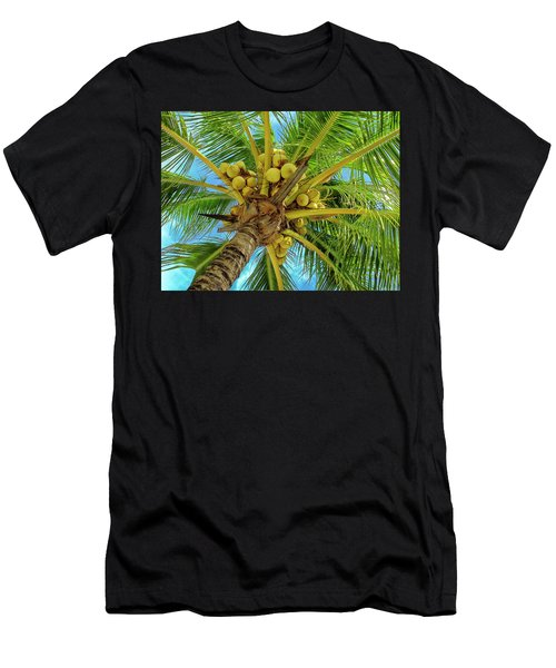 Coconuts In Tree Men's T-Shirt (Athletic Fit)