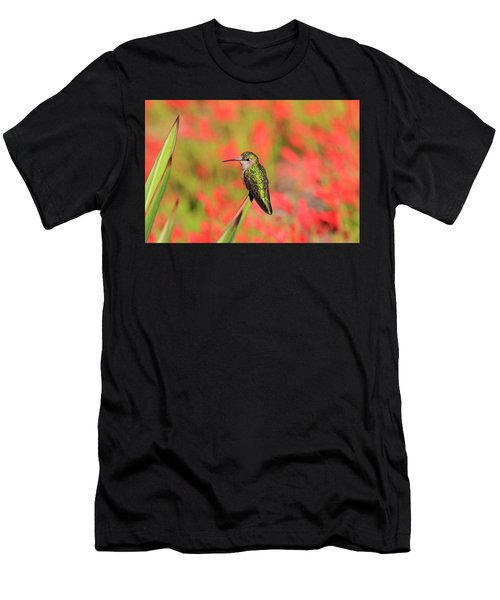 Hummingbird #5 Men's T-Shirt (Athletic Fit)