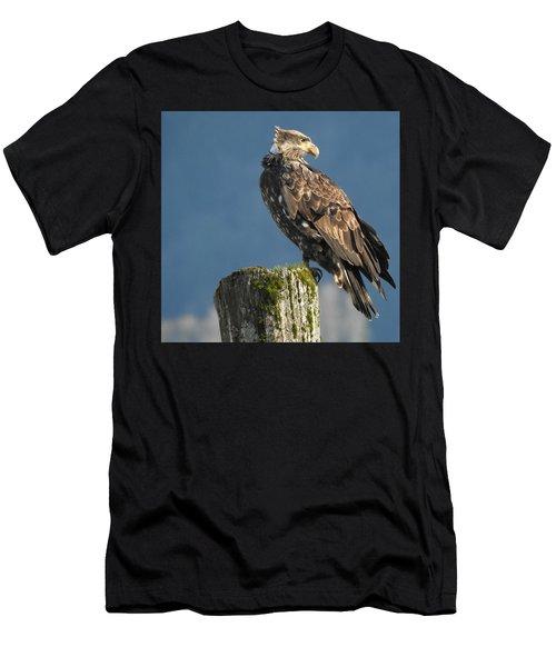 Immature Bald Eagle Men's T-Shirt (Athletic Fit)