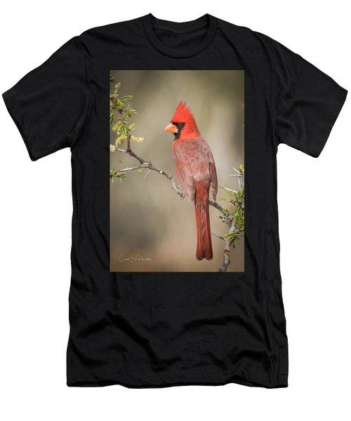 Northern Cardinal Cfh17765 Men's T-Shirt (Athletic Fit)