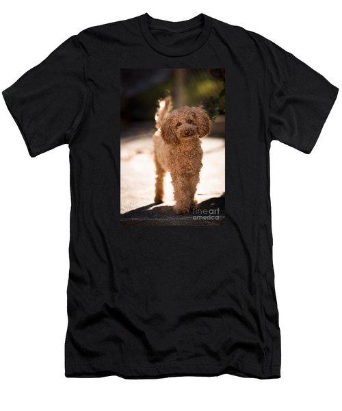 Poodle Men's T-Shirt (Athletic Fit)