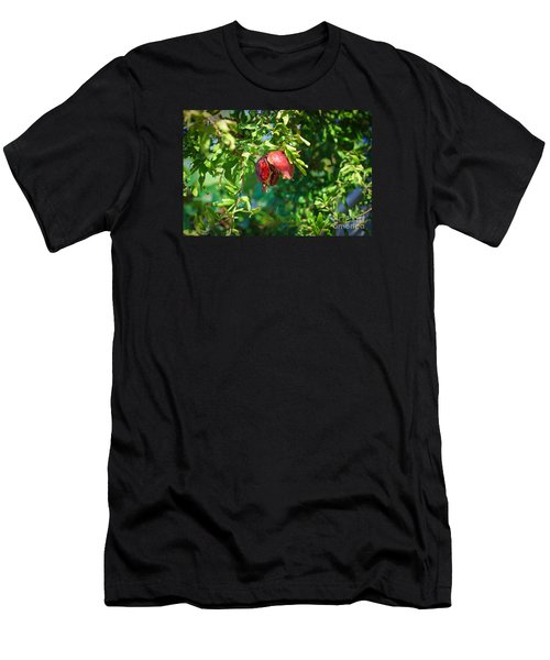 Ripe Pomegranate On The Tree In Jerusalem During Sukkoth Men's T-Shirt (Athletic Fit)