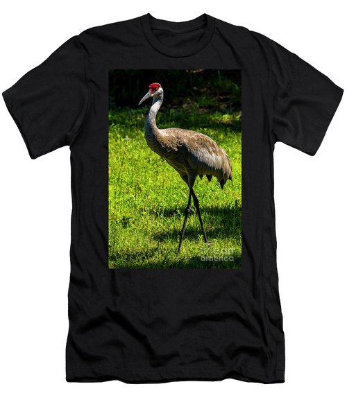 Sand Hill Crane Men's T-Shirt (Athletic Fit)