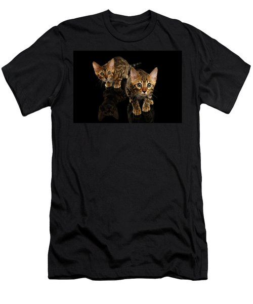 Two Bengal Kitty Looking In Camera On Black Men's T-Shirt (Athletic Fit)