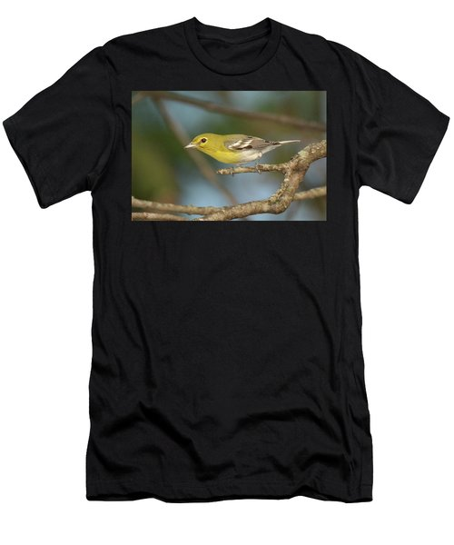 Yellow-throated Vireo Men's T-Shirt (Athletic Fit)
