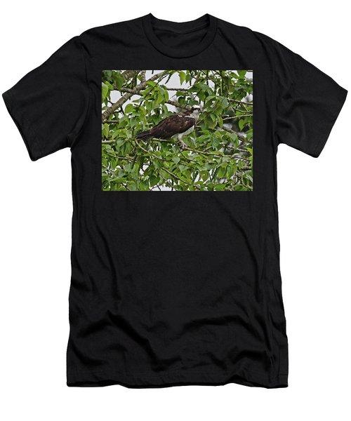 Osprey Fishing Men's T-Shirt (Athletic Fit)