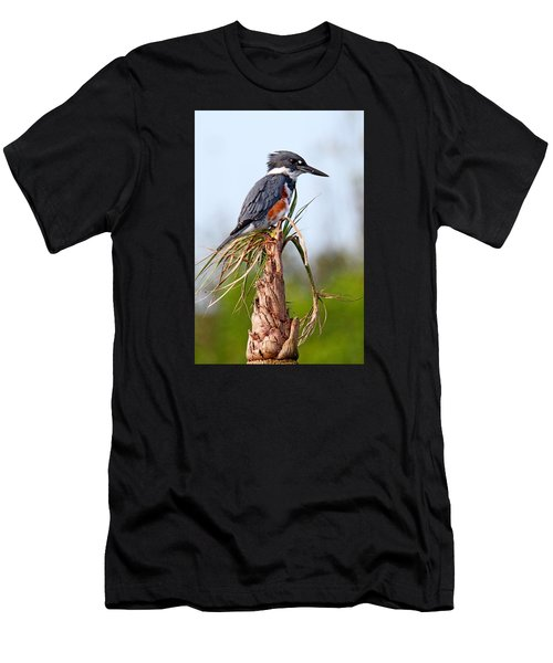 Belted Kingfisher Men's T-Shirt (Athletic Fit)