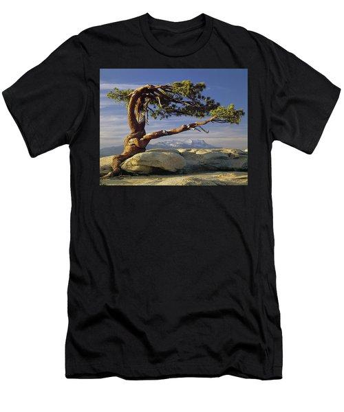 1m6701 Historic Jeffrey Pine Sentinel Dome Yosemite Men's T-Shirt (Athletic Fit)