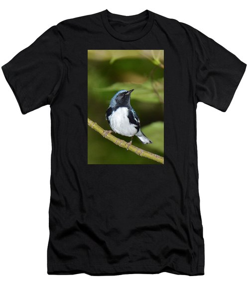 Black-throated Blue Men's T-Shirt (Athletic Fit)