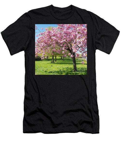 Cherry Blossom Tree Men's T-Shirt (Athletic Fit)