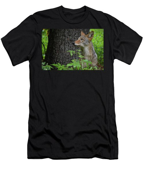 Early Morning Coyote In Maine Men's T-Shirt (Athletic Fit)