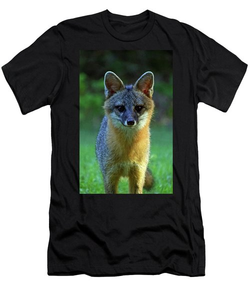 Fox Men's T-Shirt (Athletic Fit)