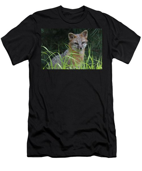 Gray Fox In The Grass Men's T-Shirt (Athletic Fit)