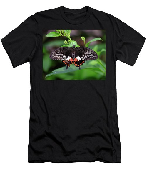 Great Mormon Butterfly Men's T-Shirt (Athletic Fit)