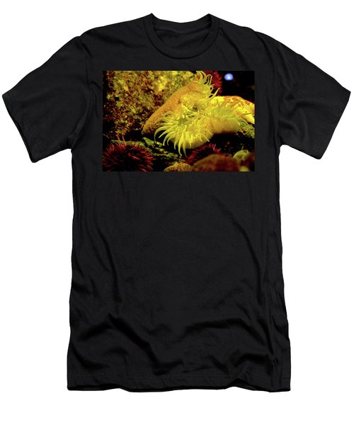 Sea Urchins Men's T-Shirt (Athletic Fit)