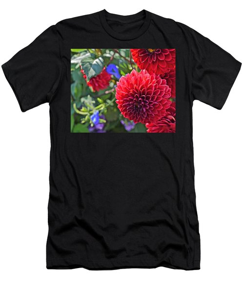 2015 Mid September At The Garden Dahlias 2 Men's T-Shirt (Athletic Fit)