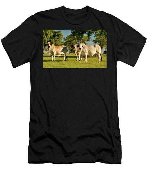 3 Brahmas Men's T-Shirt (Athletic Fit)