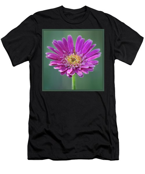 Gerbera Daisy  Men's T-Shirt (Athletic Fit)