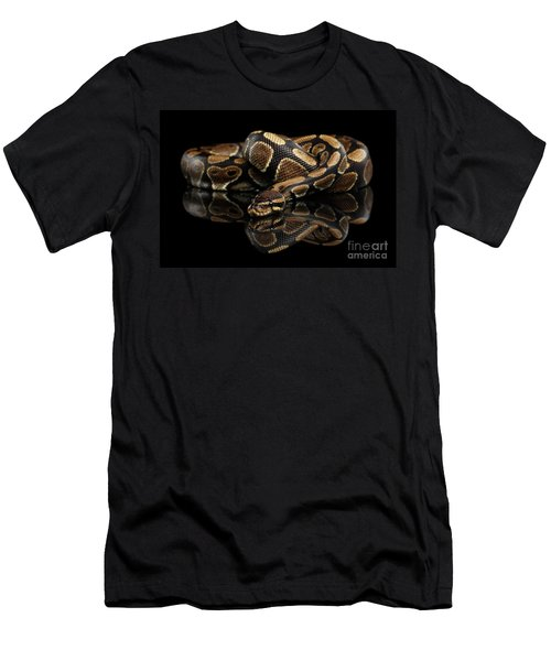 Men's T-Shirt (Athletic Fit) featuring the photograph Ball Or Royal Python Snake On Isolated Black Background by Sergey Taran